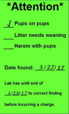 Lime Green colored card with Attention in bold, prefilled with example of pups on pups and sample dates