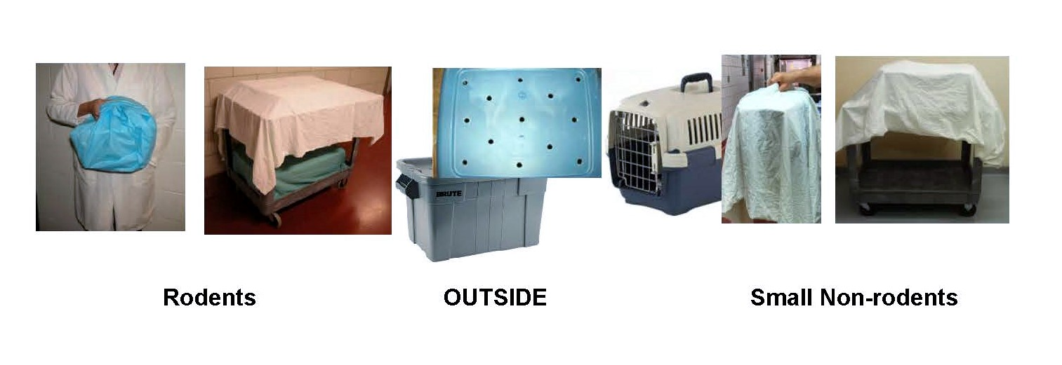 image of example transport carriers for rodent, small non-rodent, and secondary enclosure